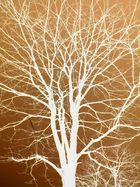 L'arbre extraordinaire
