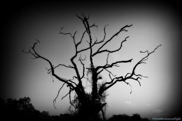 L'arbre...
