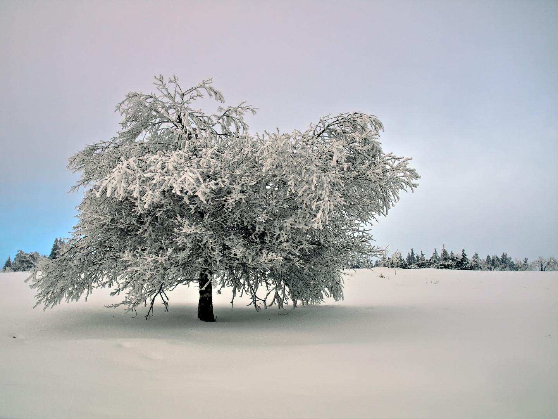 L'arbre hivernale - der winterliche Baum