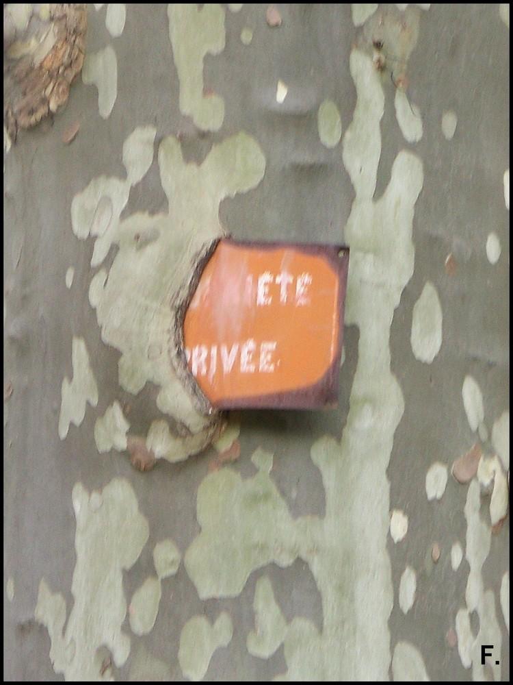 L'arbre mangeant un panneau.