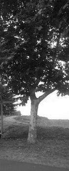 L'arbre militaire