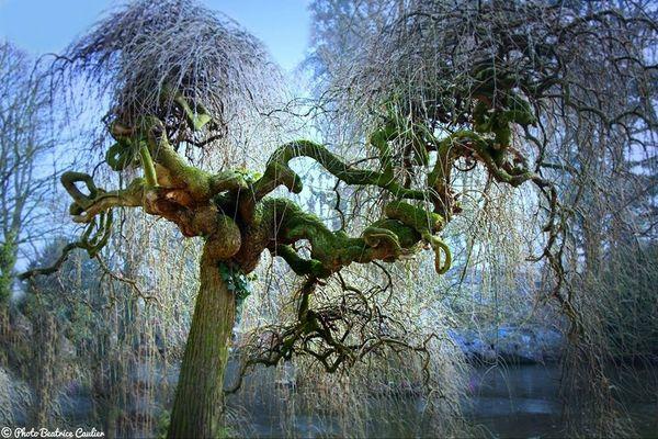 L'arbre mystérieux