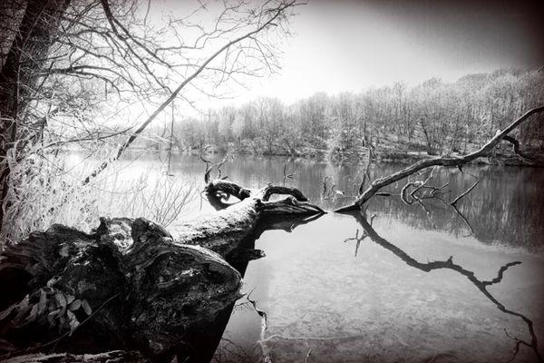 L'arbre noyé