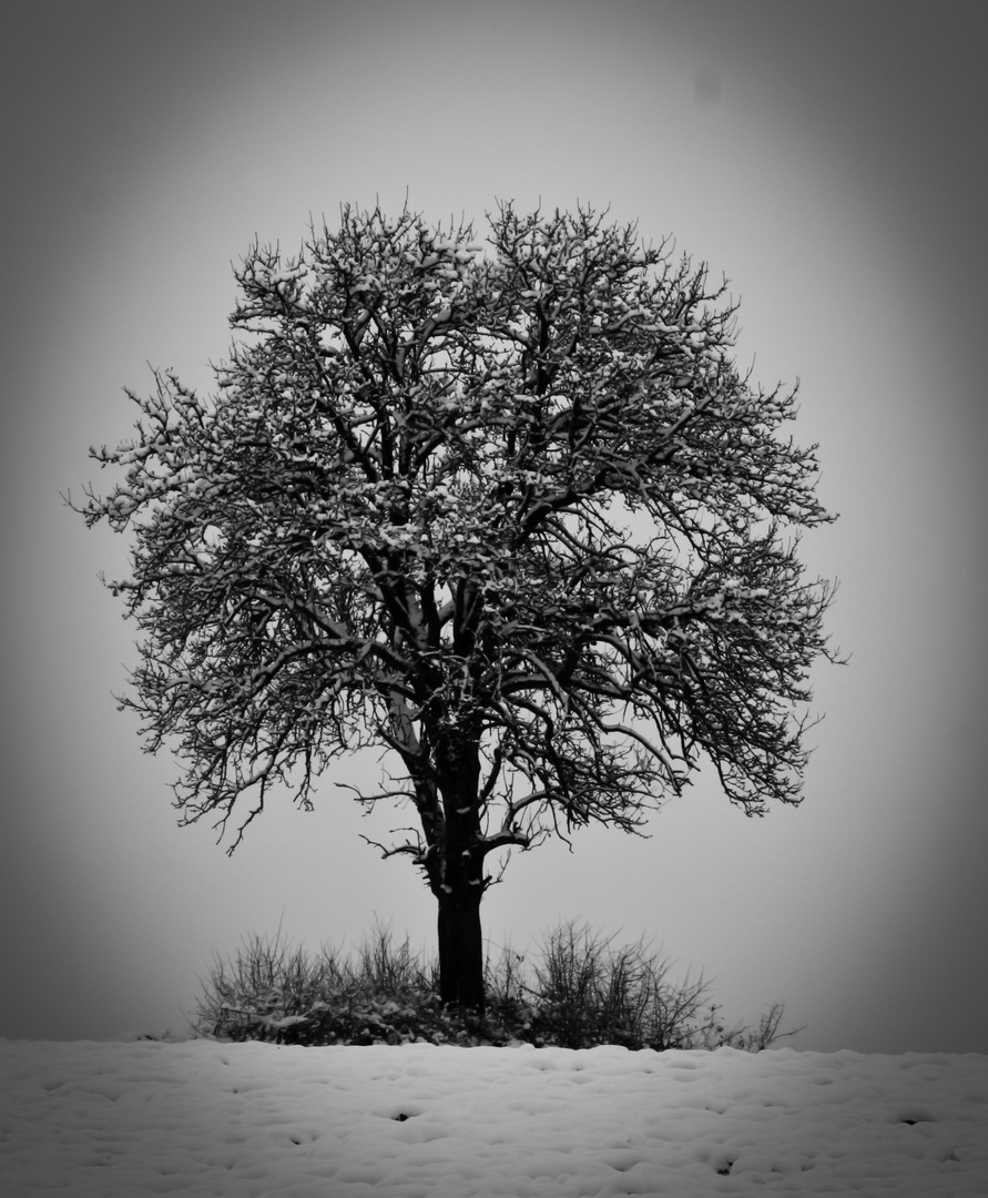 L'arbre perdu