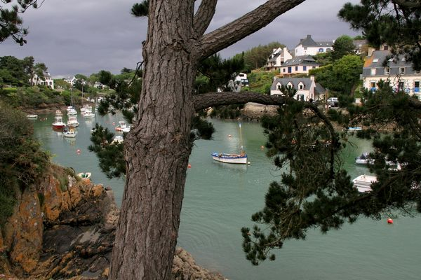 l'arbre qui cache la flotille