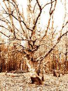 L'arbre qui cache la foret