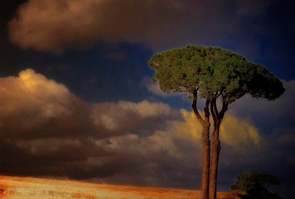 L'arbre qui ne cache pas la fôret