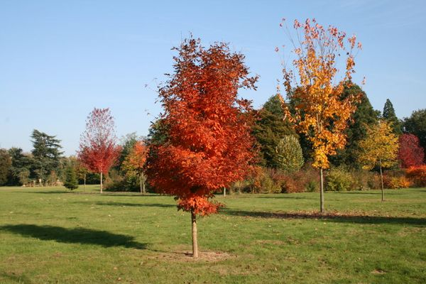 l'arbre rouge oranger d'autonne