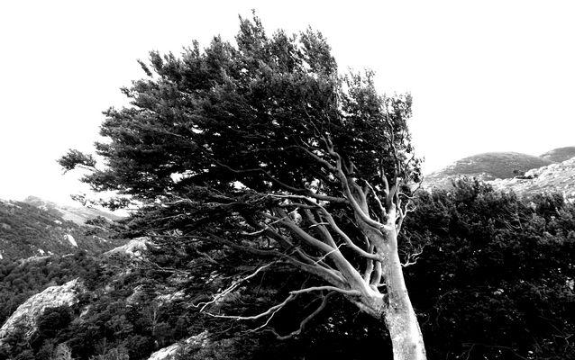 > L'arbre se sauve en faisant tomber ses feuilles.