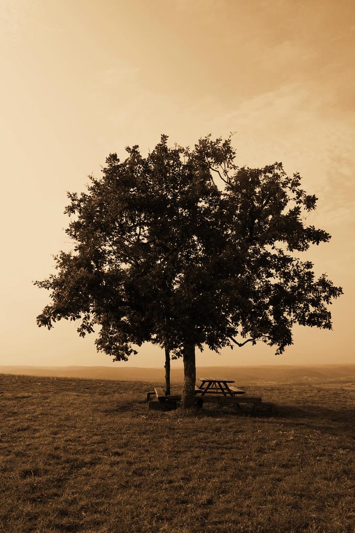 L'arbre souvenir!