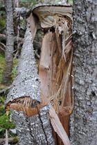 L'arbre tordu