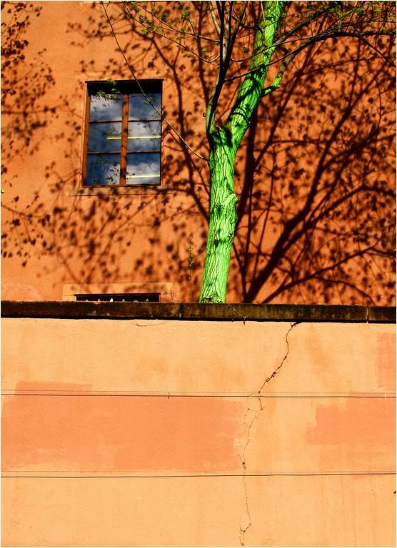 L'arbre vert.