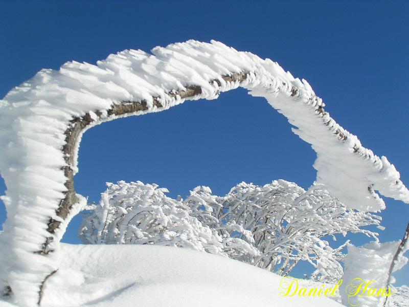 l'arche blanc