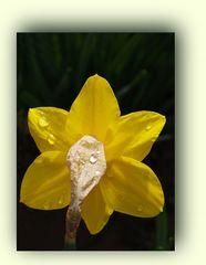 L'arrière d'un matin de printemps en mars  --  Rückansicht über einen Frühlingsmorgen im März