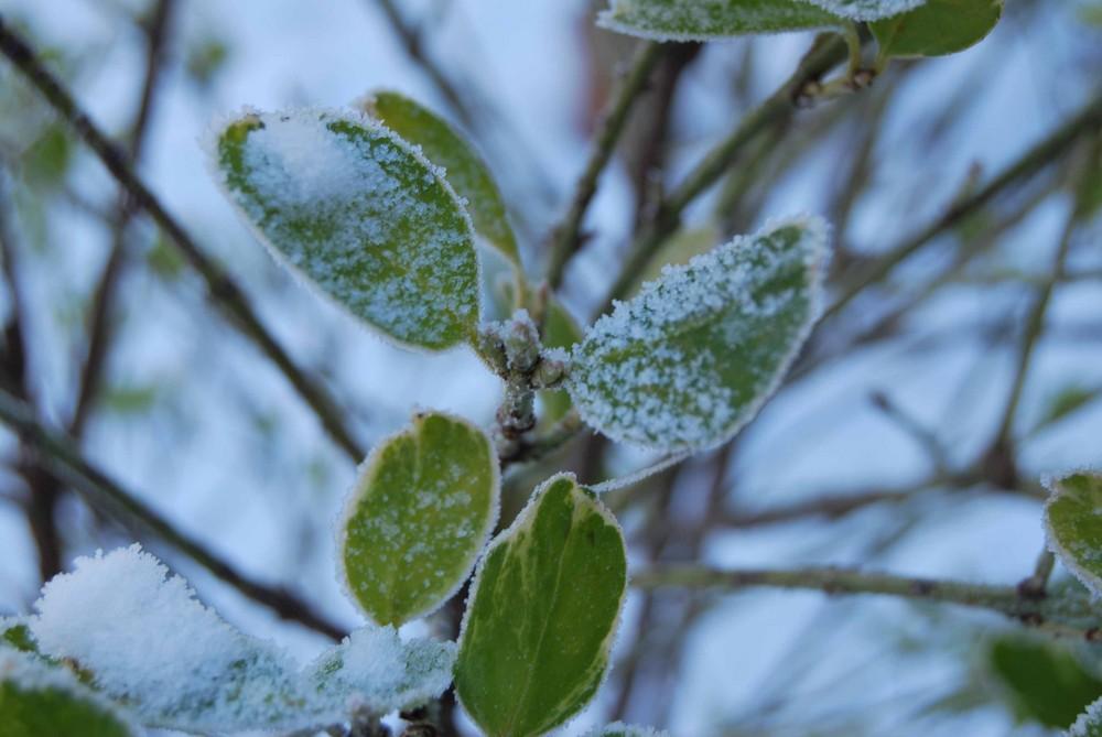 l'arrivée de l'hiver