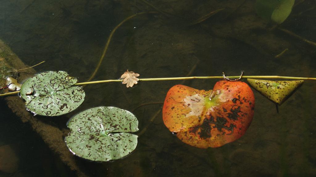 L'art dans la nature