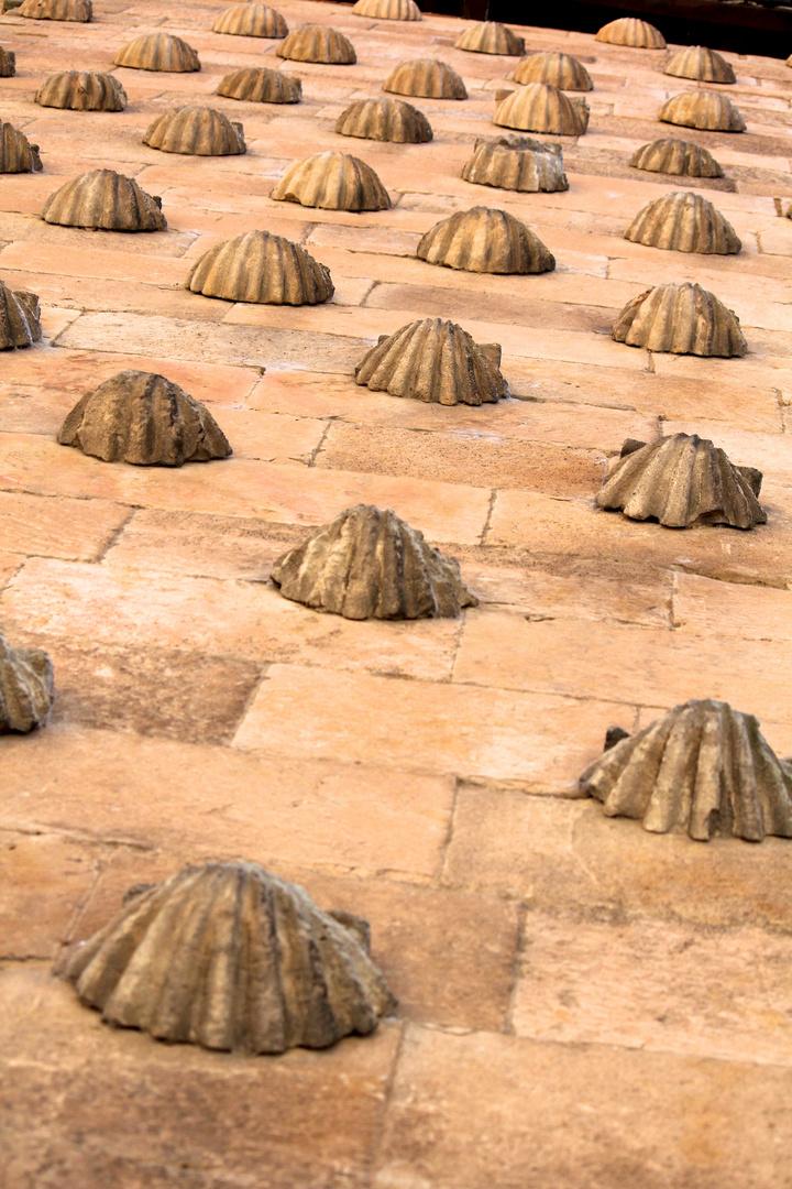 las conchas Salamanca