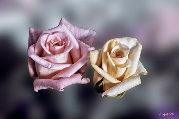 Las dos rosas