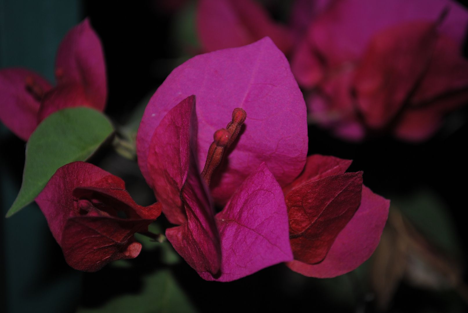 Las espinas de la vida se trocarán en flores para toda la eternidad.
