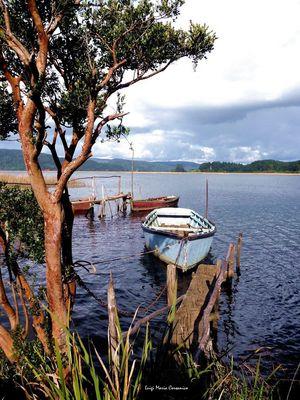 Las Gaviotas. Rìo Angachilla, Valdivia - Sur de Chile