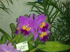 Las Orquideas de Maria de Pinto,,,,,,,