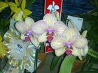 Las Orquideas de Maria de Pinto....