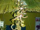 Las Orquideas de Maria de Pinto.......