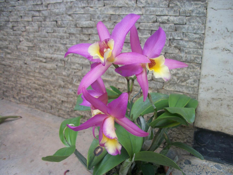 Las Orquideas de Maria de Pinto bb