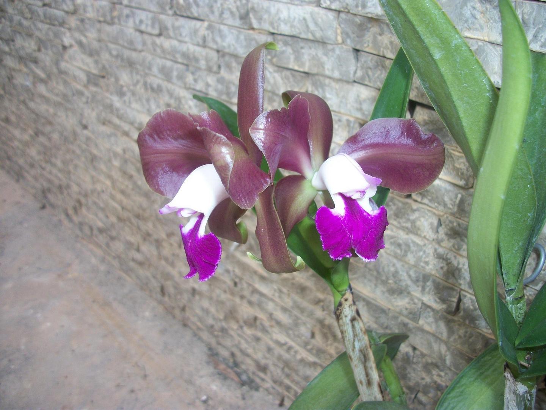 Las Orquideas de Maria de Pinto cc