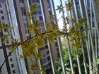 Las Orquideas de Maria de Pinto, en casa