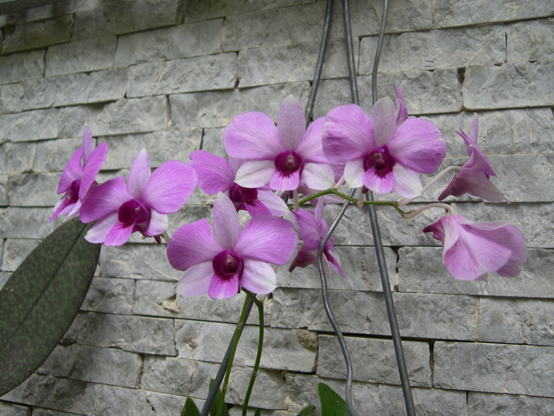 Las Orquideas de Maria de Pinto, en la pared