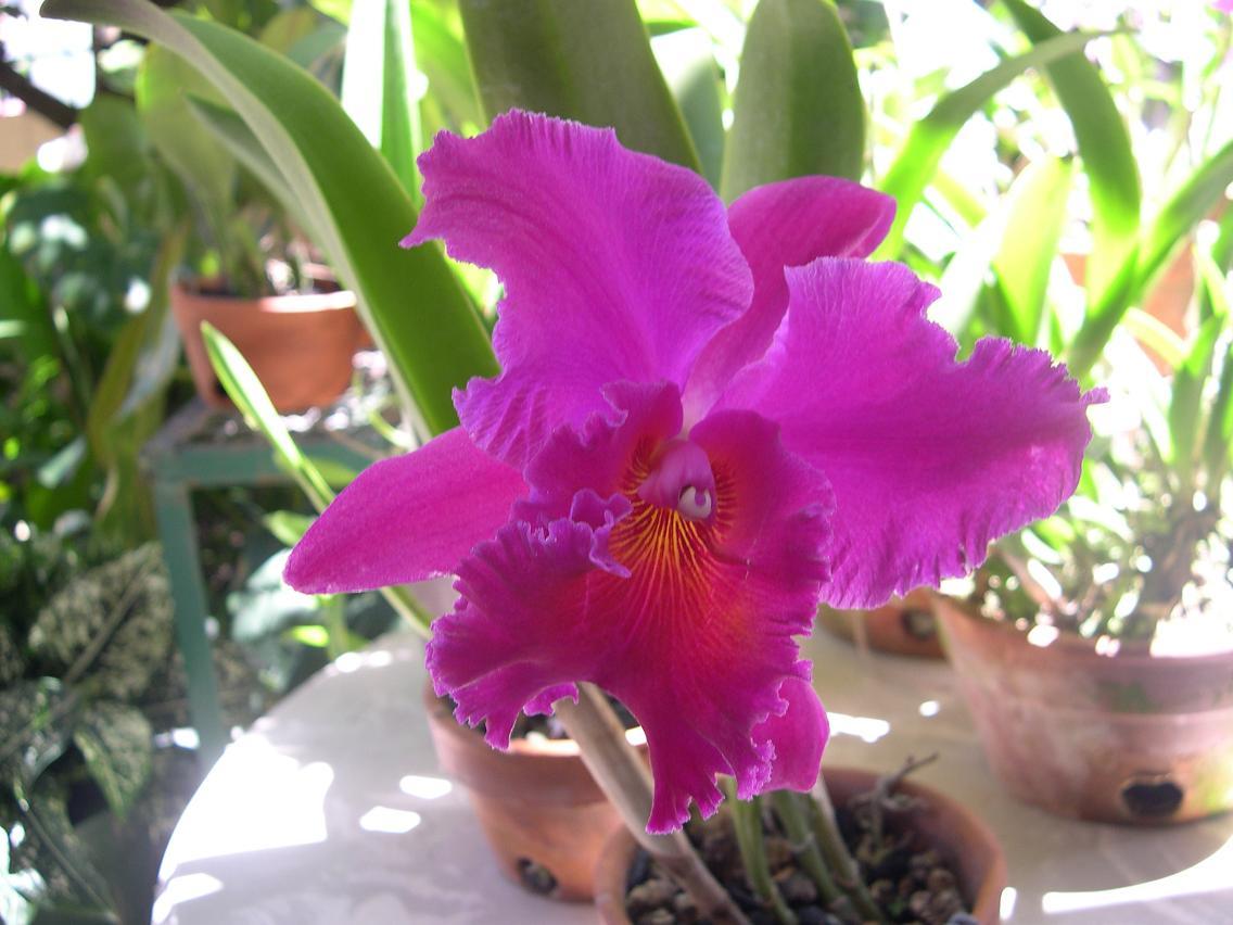 Las Orquideas de Maria de Pinto, espectacular