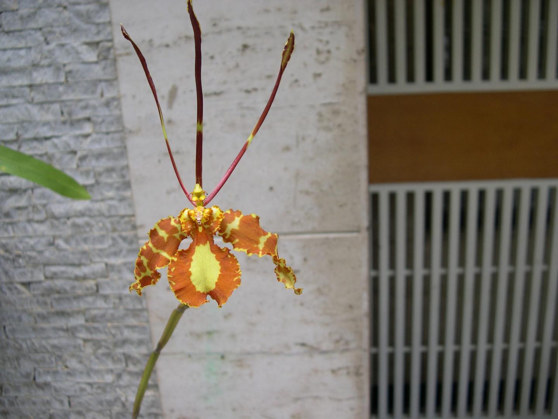 Las Orquideas de Maria de Pinto, Mariposas