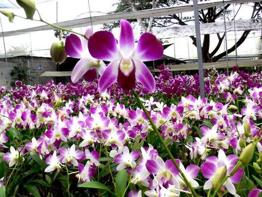 Las orquideas en el eden