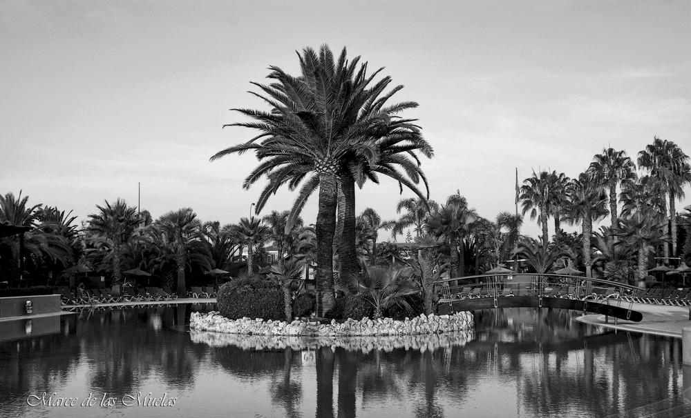 ...las palmeras...