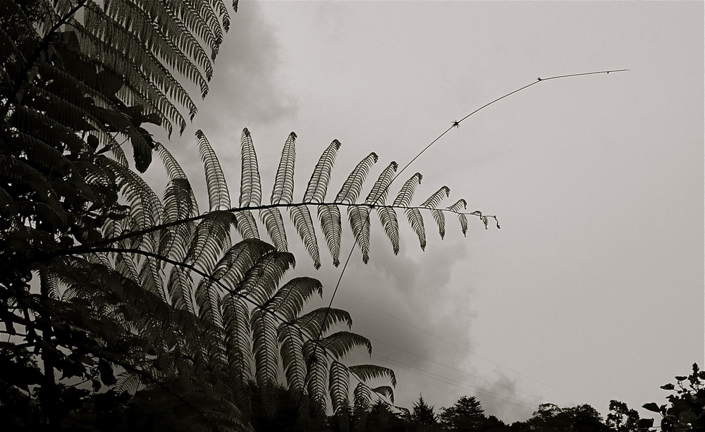 Las plumas que visten los helechos