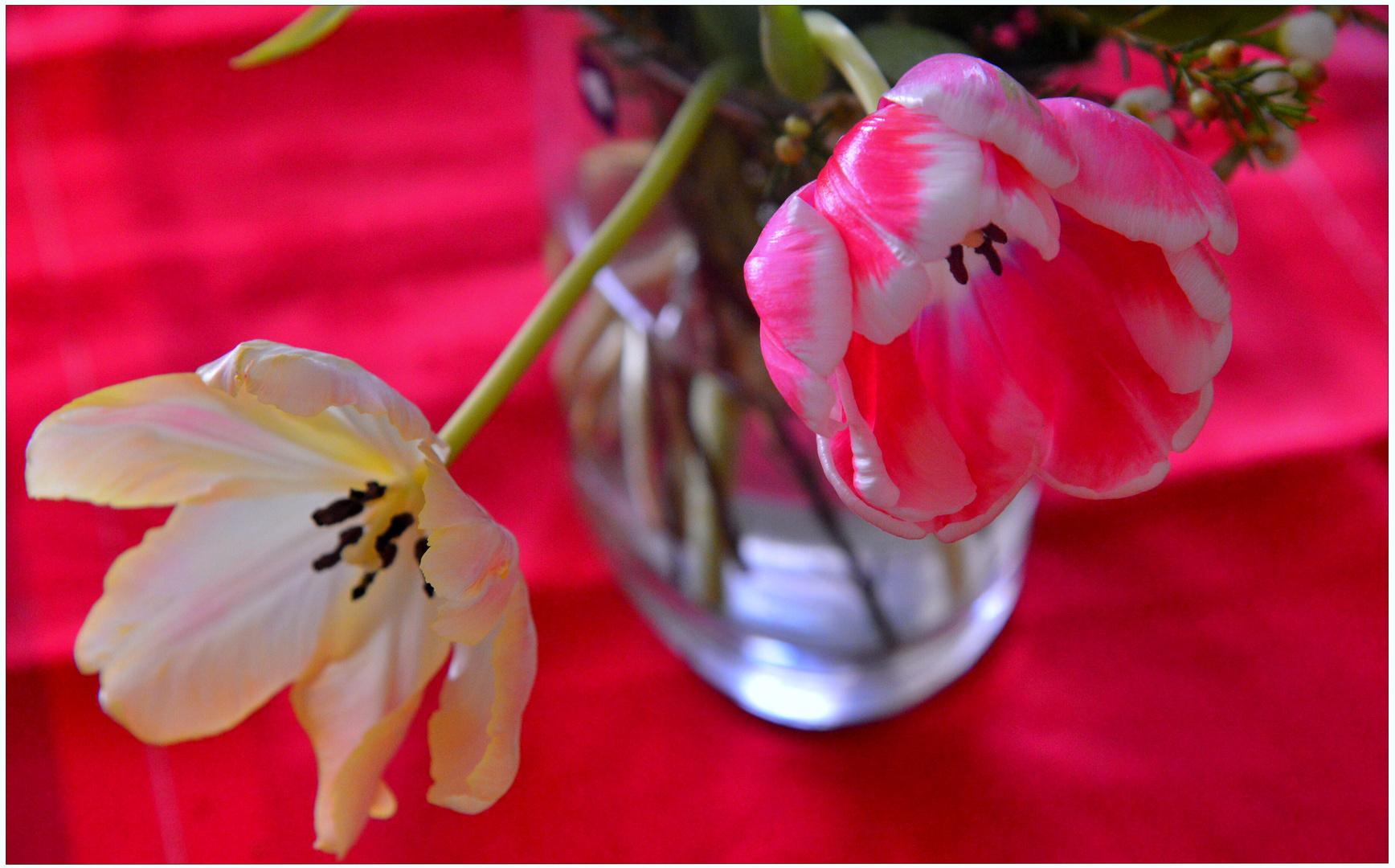 las primeras flores II (die ersten Blumen II)