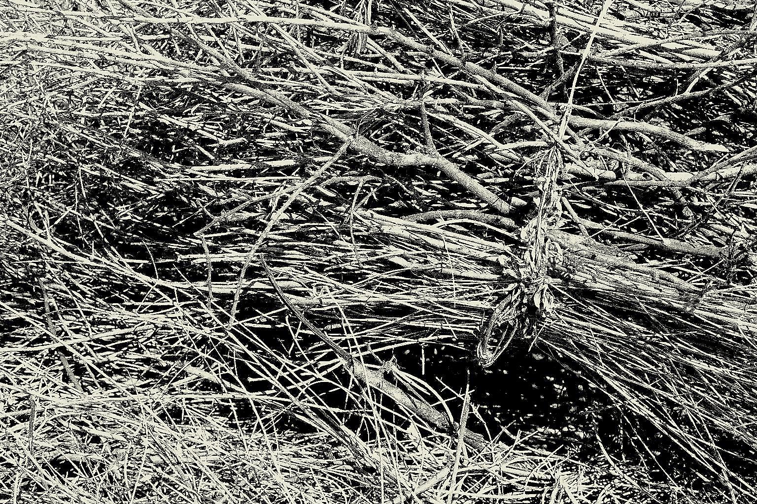 Las ramas del tiempo