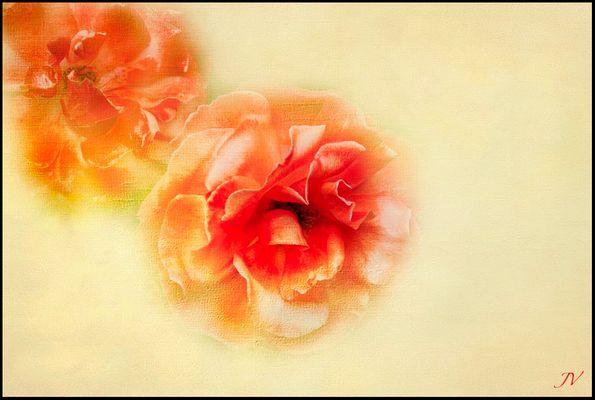 Las rosas de Barcelona
