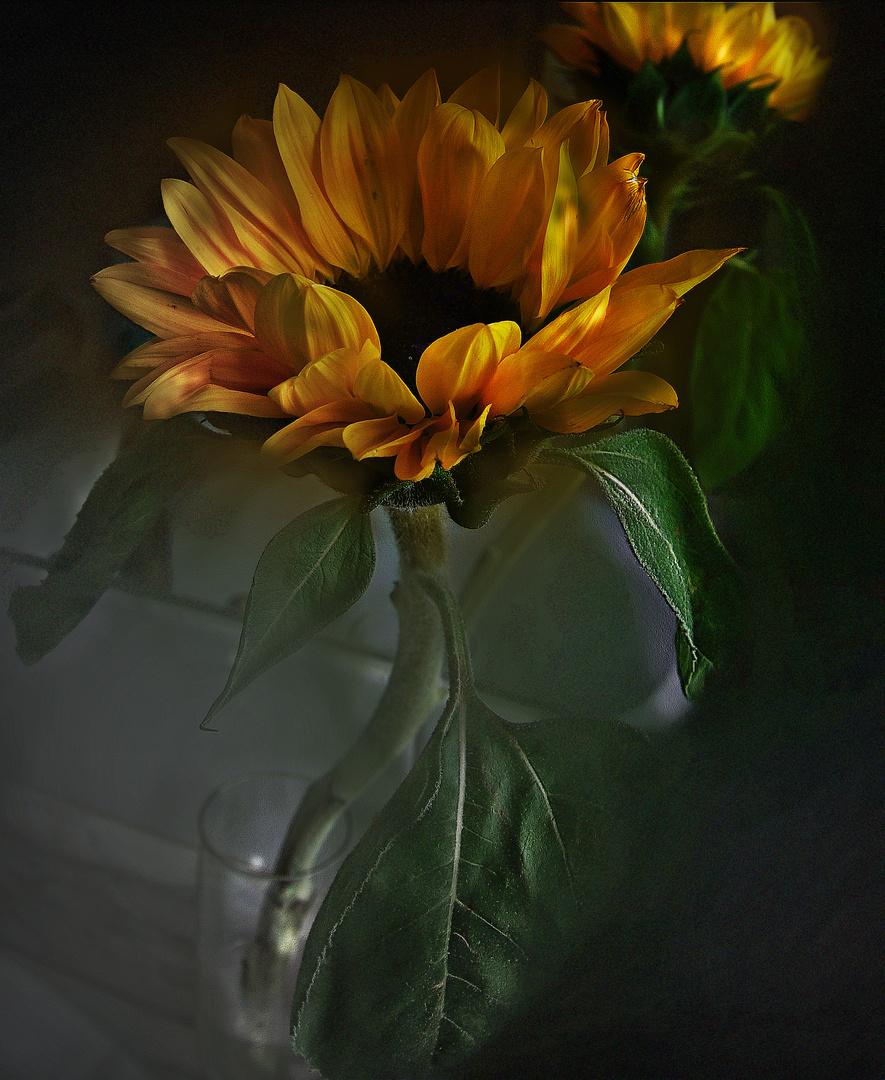 Las sombras del girasol 1.