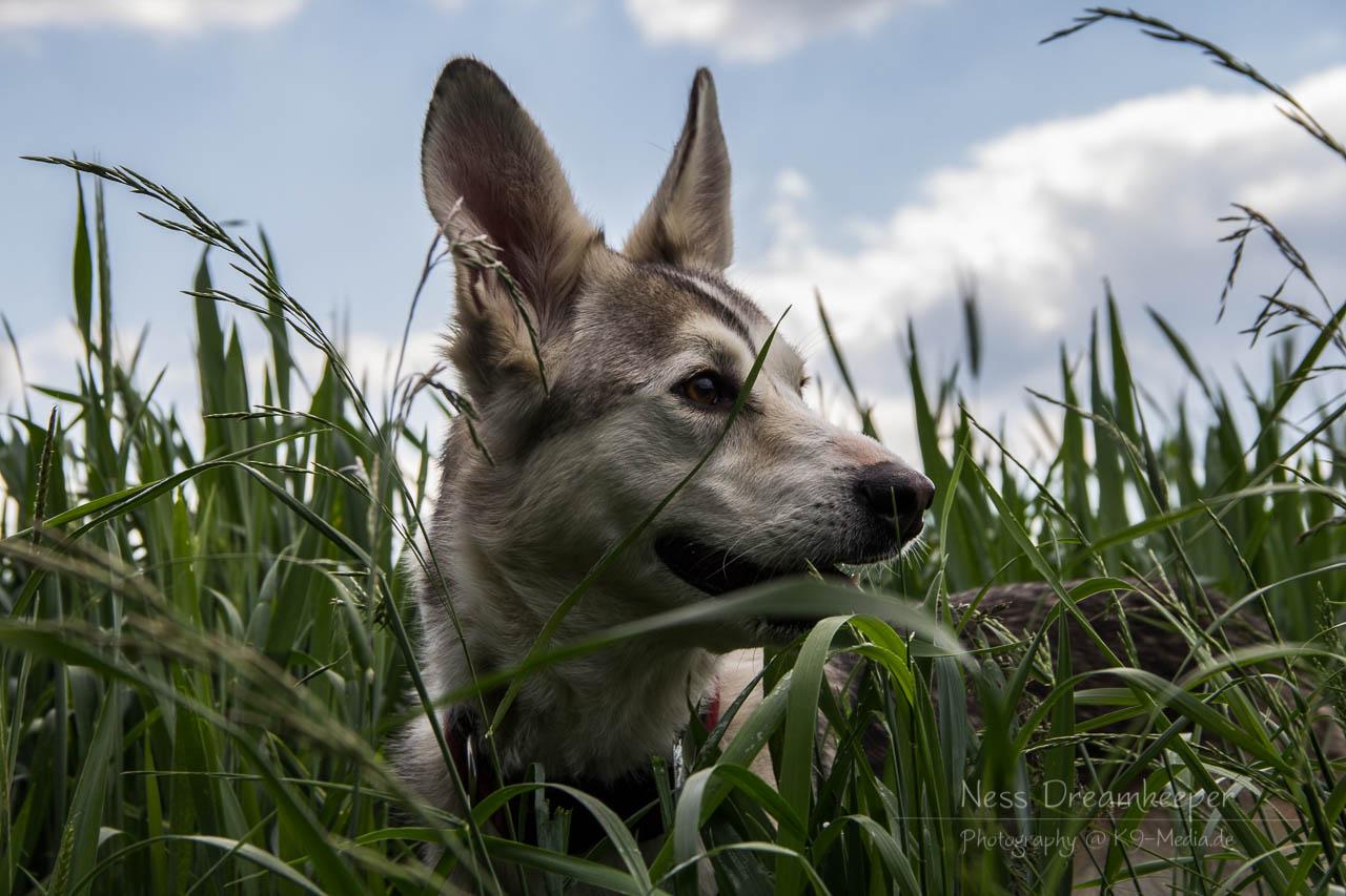 Lasha im Gras