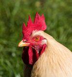 Lass bloß die Finger von meinen Hühnern!