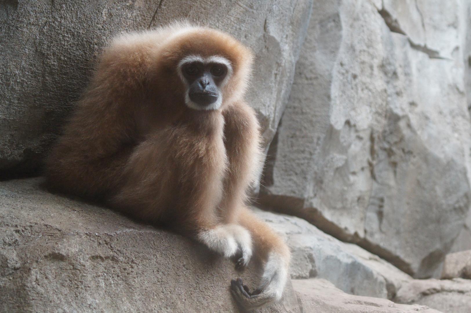 lass den kopf nicht h ngen foto bild tiere zoo wildpark falknerei s ugetiere bilder auf. Black Bedroom Furniture Sets. Home Design Ideas