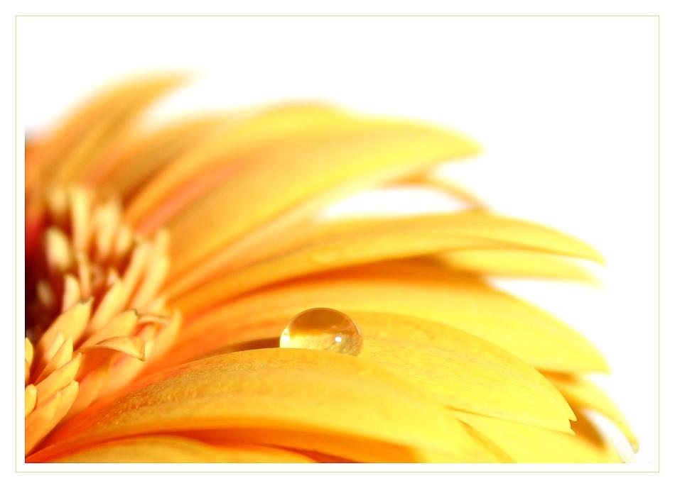 Lass die Sonne in Dein Herz...auch wenn es regnet