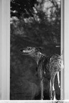 Lass mich bitte rein!