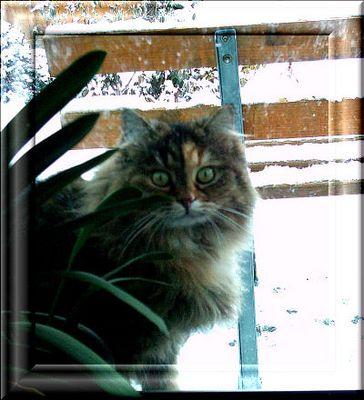 Lass mich herein, Frauchen! Es ist sooooooooo kalt draußen!