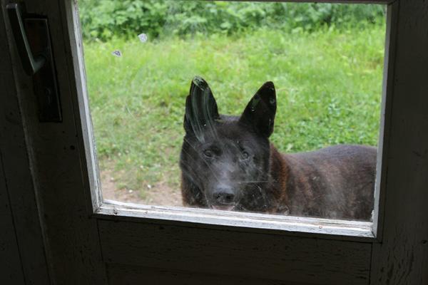 Lass mich rein