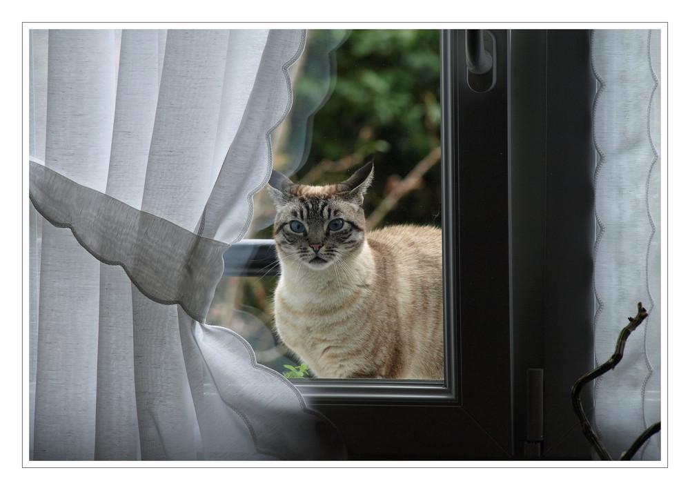 Lass mich rein...