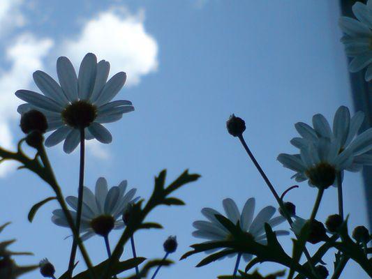 Lass uns in den Himmel schauen