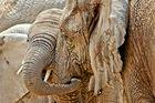 Lass uns schmusen - Elefanten im Etosha-NP